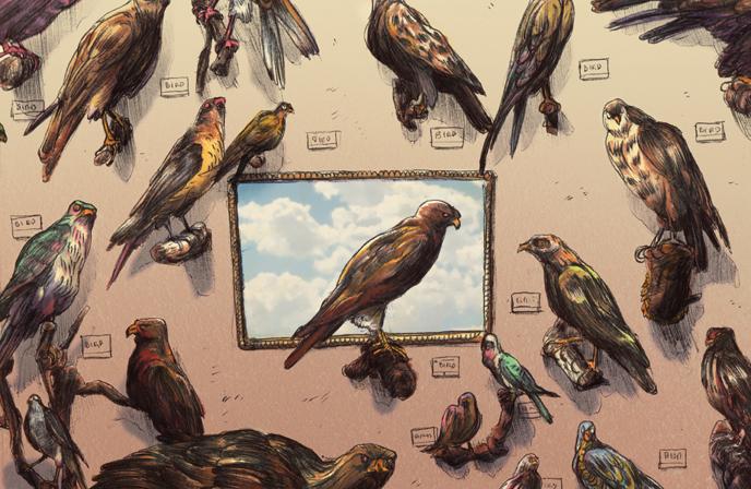 Birds_Blog_Color